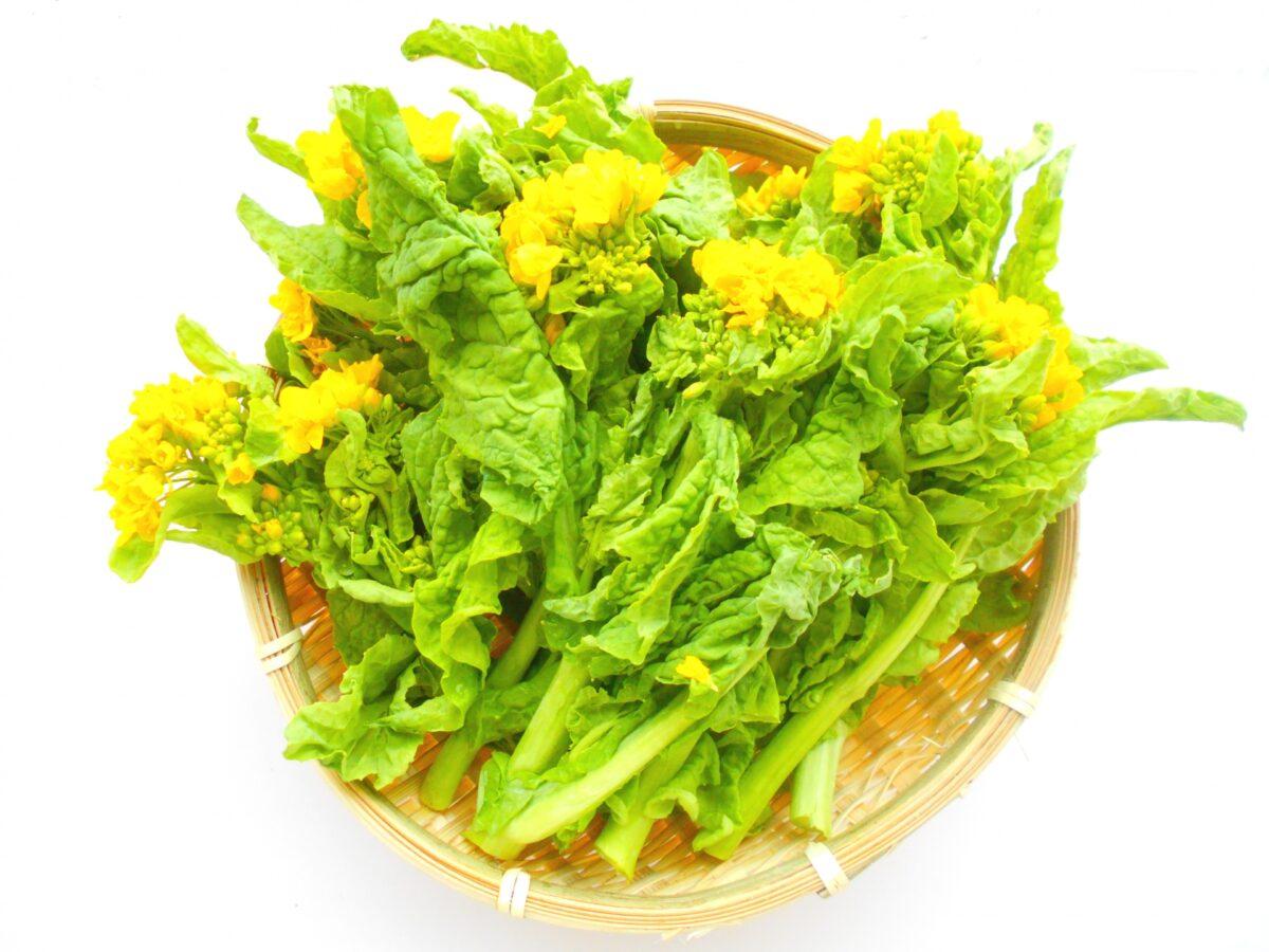 花が咲いた菜の花は食べられる?