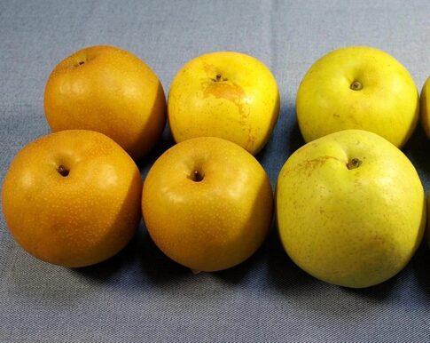 梨の種類別の日持ちは?