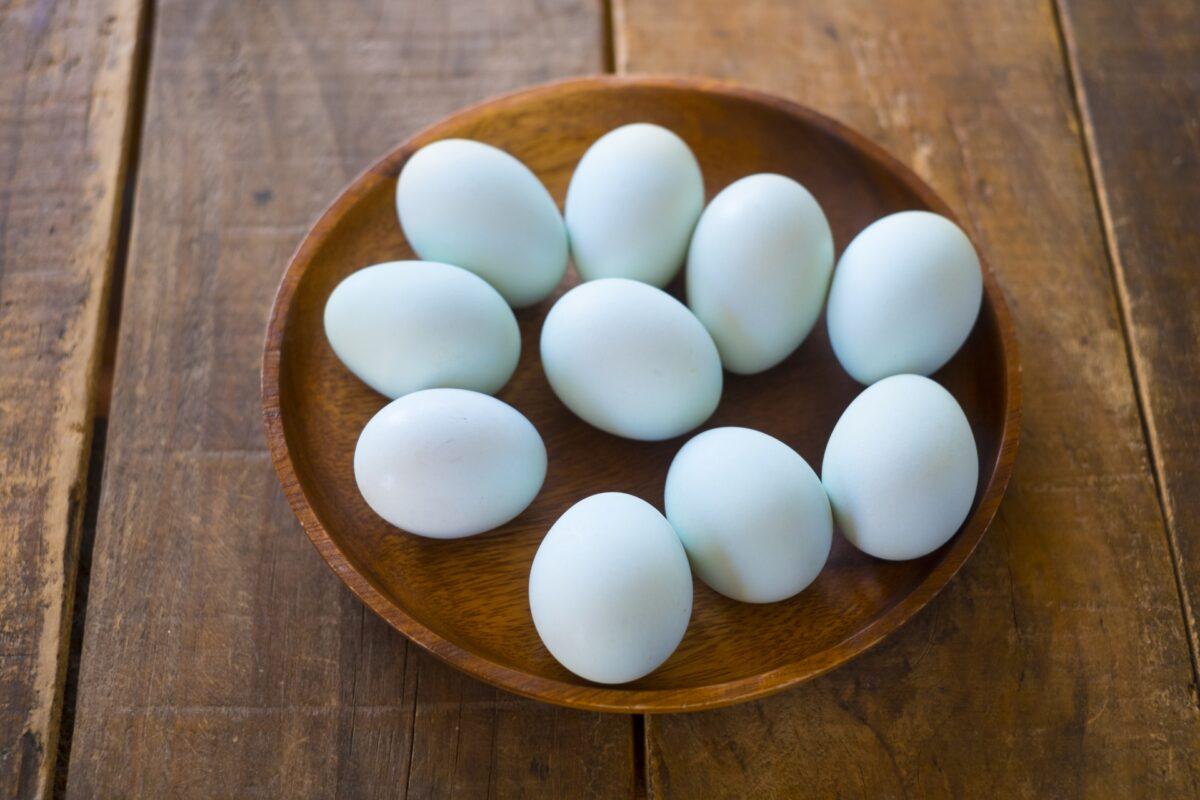 青い卵はどこで買える?